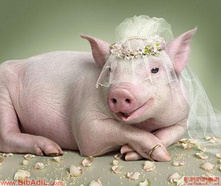 عکس آتلیه ای عروس ، بی بدیل ، Bibadil