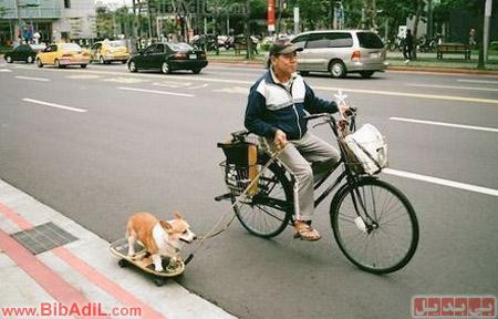 بی بدیل - متد جدید گردش بردن سگ