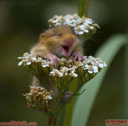 بی بدیل - آخ جون! گل!